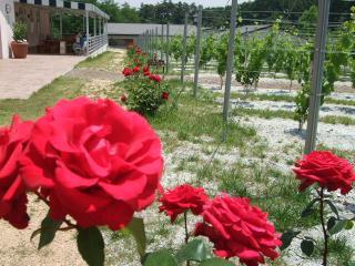 安曇野ワイナリー 一列に並ぶバラ