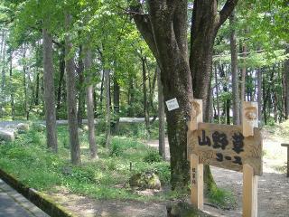 山野草コース
