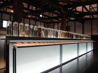 養命酒の原材料の展示