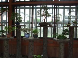 縄手通り 盆栽