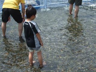 魚にさわれる体験