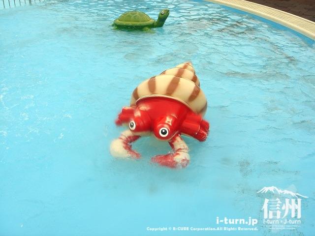 乳児プールのやどかり