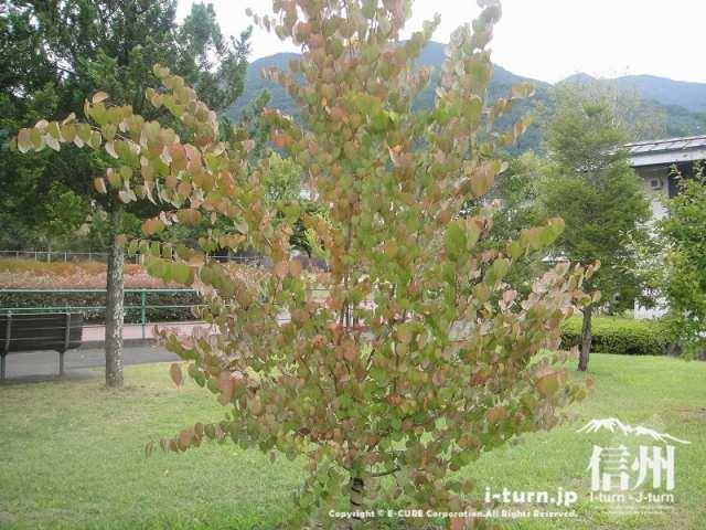 宮田村ふれあい広場 記念植樹