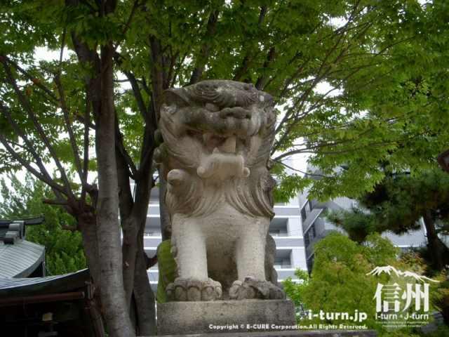 四柱神社の狛犬(こまいぬ)