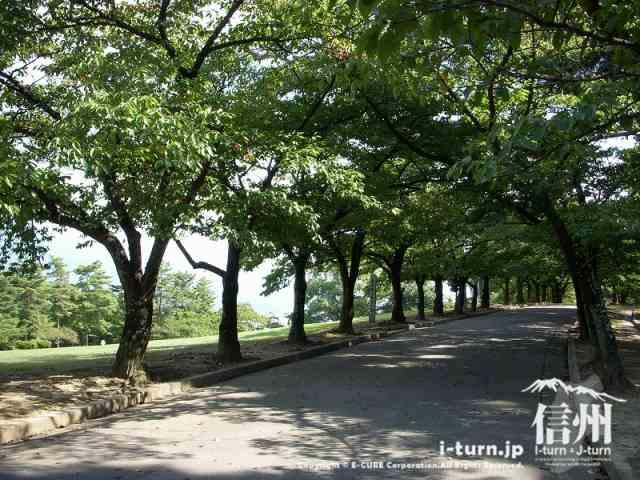 桜並木を奥へ奥へ進みましょう。