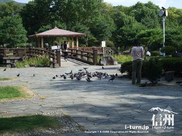 公園の方にはハトがいっぱい