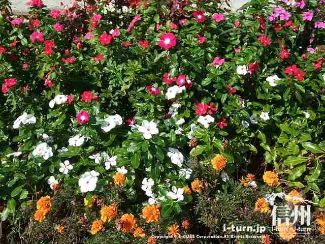 花時計公園 花壇には花がいっぱい