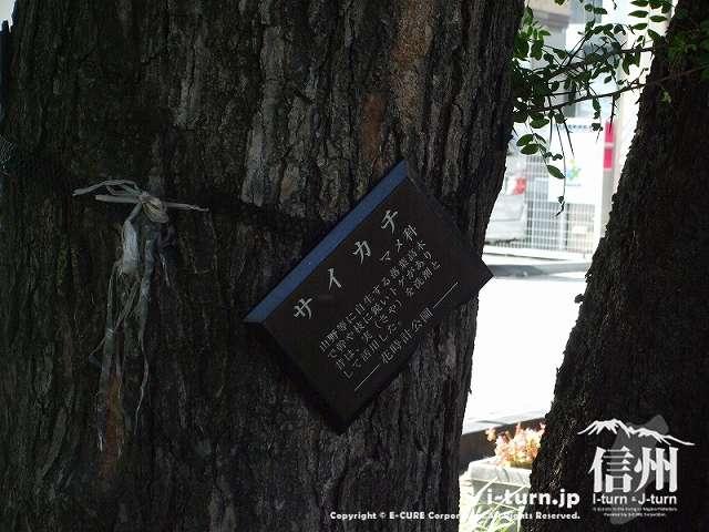 花時計公園 サイカチの説明
