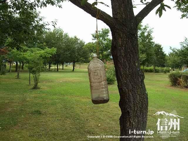 昆虫の森ゾーンの仕掛け