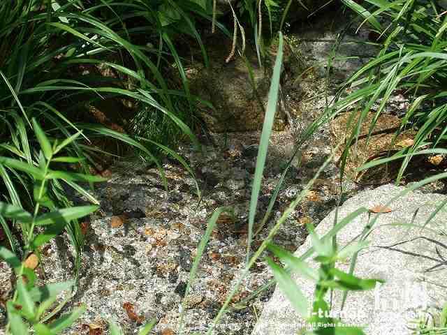 ガーデンに流れている水はみんな天然水