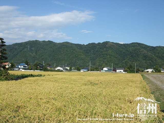 周りは田んぼや畑ののどかな場所