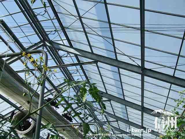 プティ・マルシェ ハウスの天井