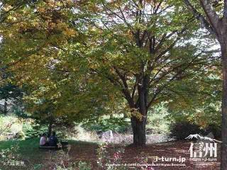 大峰高原中カエデ 駐車場脇も紅葉が楽しめる