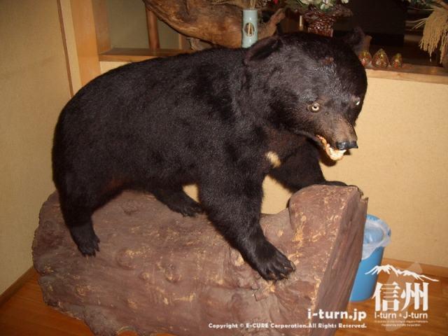 山形村唐沢そば集落「水舎」熊の剥製
