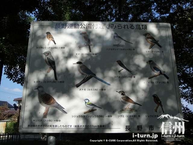 長野運動公園付近で見られる鳥類の看板