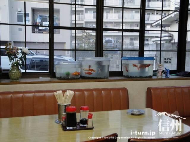 さくら食堂 出窓の金魚水槽