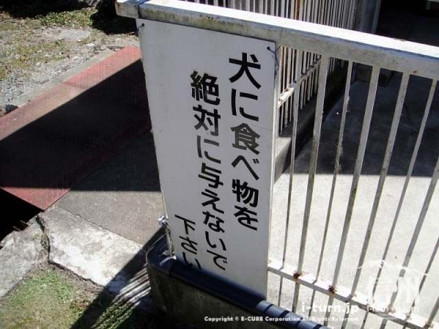 大明神釣堀センター 犬注意看板