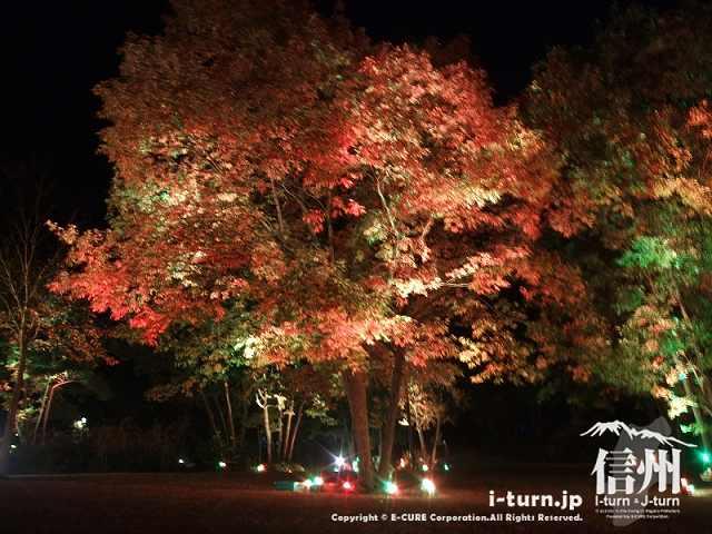 国営アルプスあづみの公園(大町・松川)|紅葉ライトアップ「アルプスあかりの森」|大町市常盤