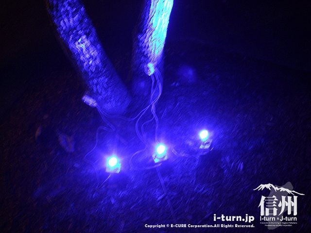 アルプスあかりの森 青いLEDライト