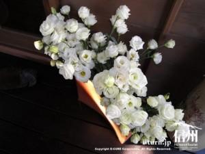 玄関横のお花は白のカーネーション