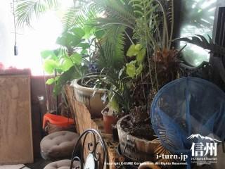 入口にあるざまざま植物