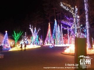 ほとんどの木が電飾で彩られている