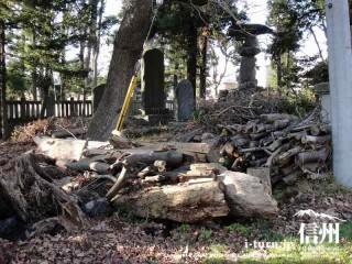 境内の樹木の沢山の枝など一箇所に