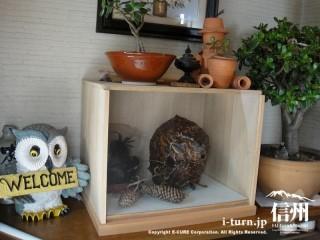 ふくろうの彫刻と蜂の巣
