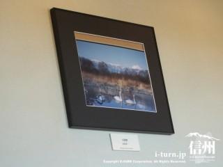 北アルプスをバックに白鳥湖の写真