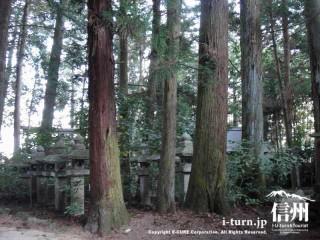 境内杉林と石灯篭