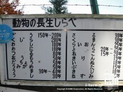 須坂市動物園の通路「長生くらべ」