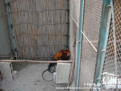 須坂市動物園のトウテンコウ
