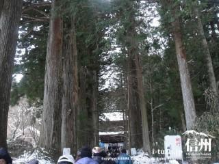 杉並木となっている参道