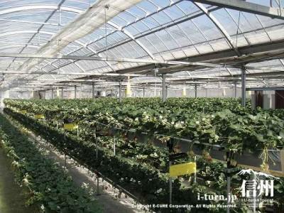 高設と低設の2段栽培