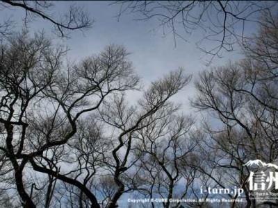 冬の高遠桜の木