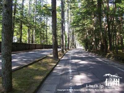 三笠通り夏の落葉松並木