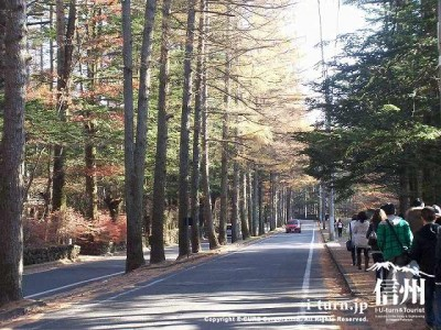 三笠通り紅葉の落葉松並木