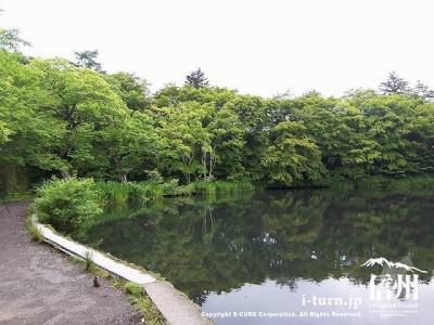 雲場池(夏)2