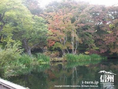 雲場池(初秋)4