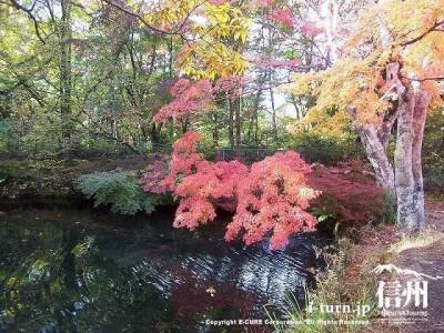 雲場池(秋)2