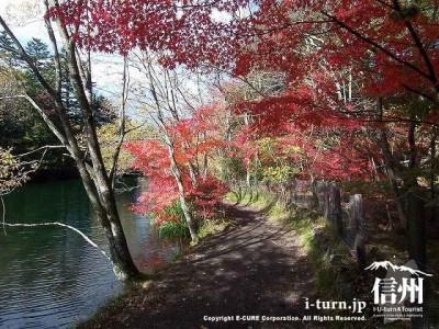 雲場池(秋)5