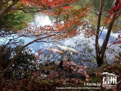 雲場池(秋)10