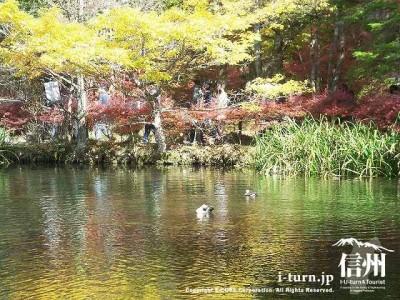 雲場池(秋)11