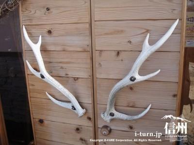 入口の取手は鹿の角
