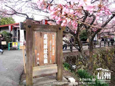 公園の看板も桜が咲くと違います