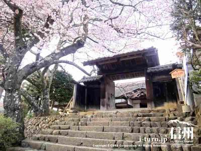 お隣の進徳館も桜が咲いています