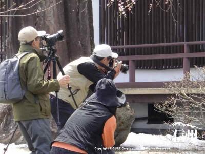 多くの方がカメラを持って撮影していました