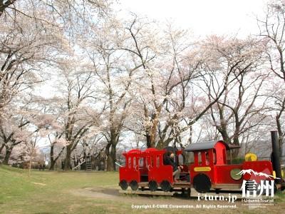 桜の時期の遊具