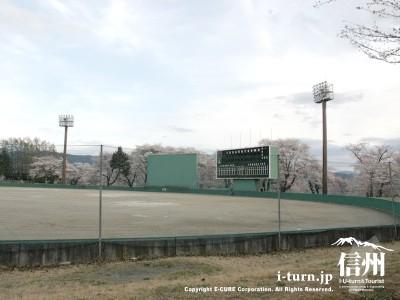 球場と桜その2
