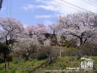 春日公園を下から見た風景